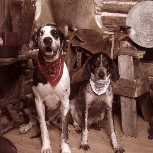Two Dogs Wearing Bandana